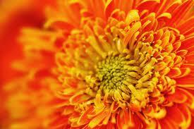 Odeća narandžaste boje daje snagu polnim organima.